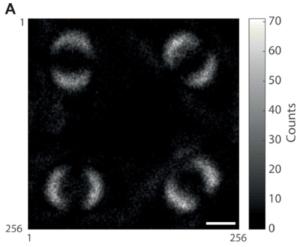 Kuantum Dolaşıklığı'nın İlk Fotoğrafı